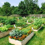 Tips and tricks for Gardening